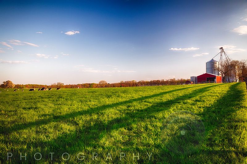 Green Farmland with Grazing Cattle in Hunterdon County, New Jersey