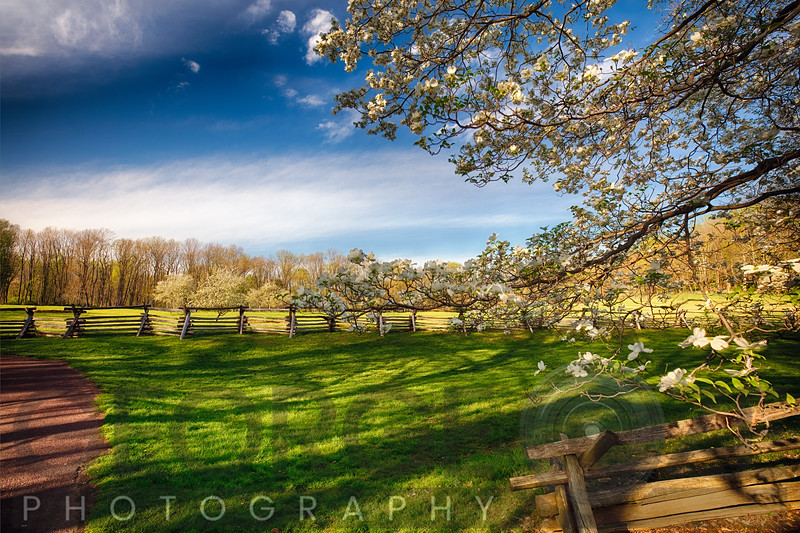 Orchard with Blloming Trees, New Jersey