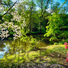 Azalea and Dogwood Bloom at  a Creek, Deleware and Raritaln Canal State Park, Griggstown, Somerset County, New Jersey, USA