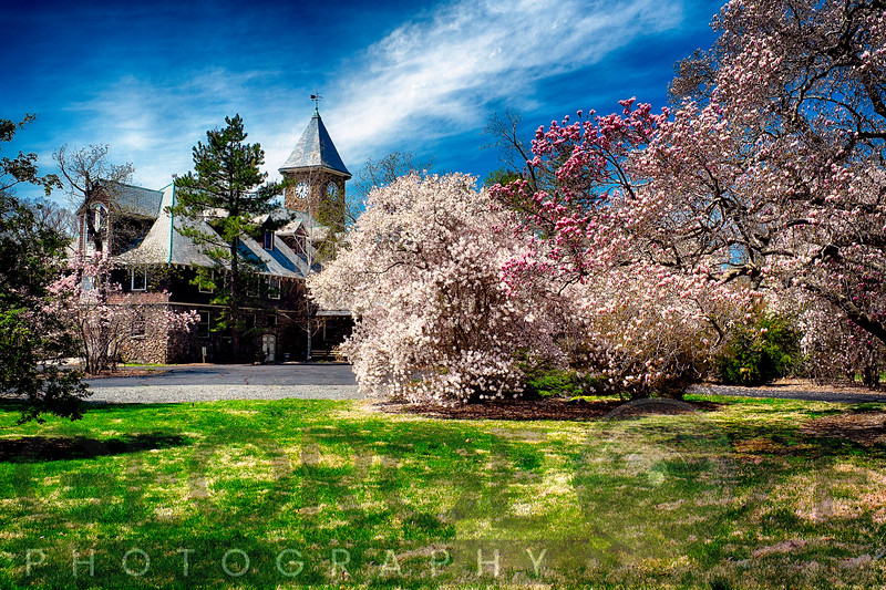 Spring Bloom in a Garden with a Rustic Building in the Background, Coach Barn, Duke Gardens, Hillsborough, Somerset County, New Jersey