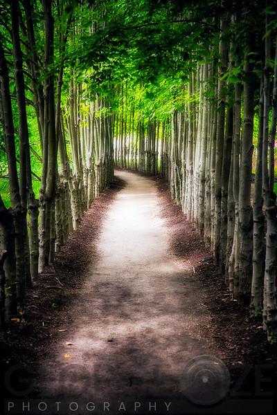 Path To My Destination