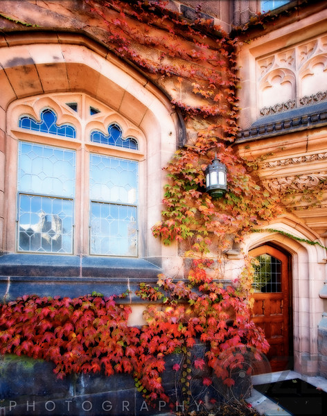 Ivy with Fall Colors,Princeton University, New Jersey