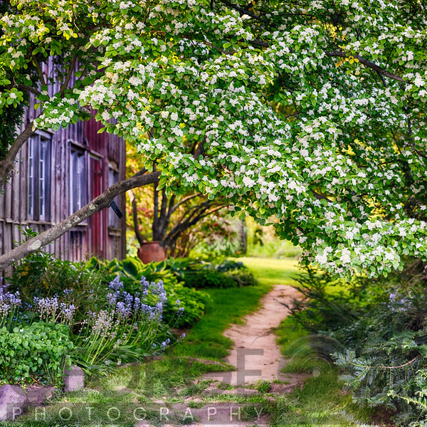 Garden Path of a Country Cottage , Somerset County, New Jersey
