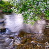 Creek with a Blooming Tree, Hunterdon County, New Jersey