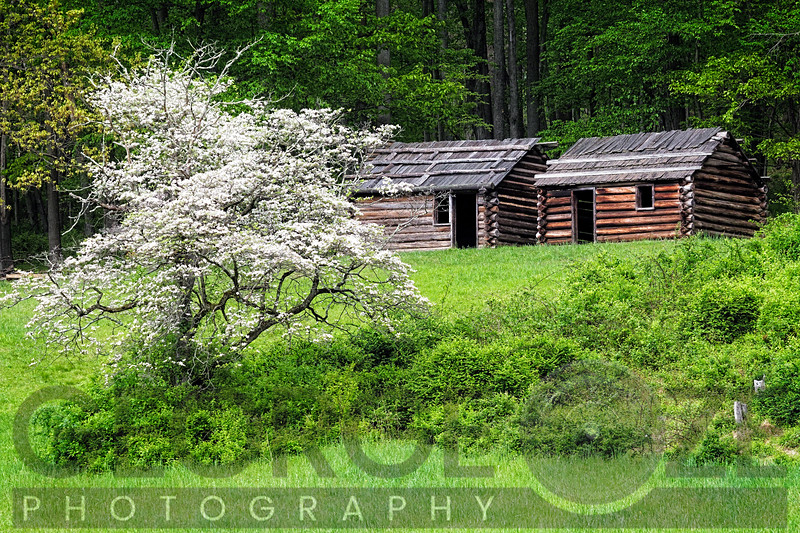 Reconstructed Soldier Huts in Jockey Hollow During Spring, Morristown, New Jersey