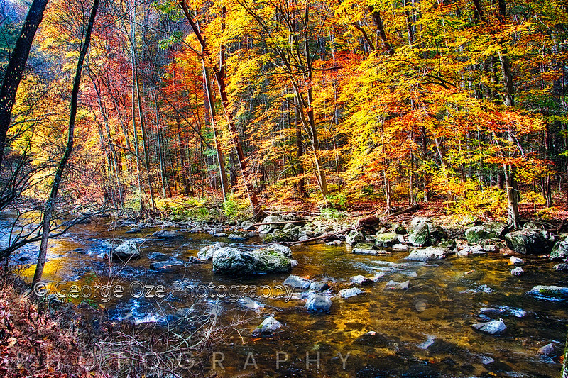 River Flowing Through Autumn Forest in New Jersey