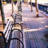 Park Benches Under the Trees, Sinatra Drive, Hoboken New Jersey