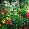Garden Flowers Bloom in Willowwood Arboretum, Far Hills, Morris County, New Jersey
