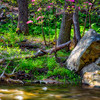 Ken Lockwood Gorge Spring Scenic, New Jersey