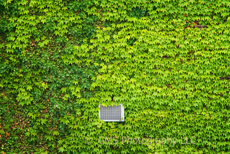 Peeking Through Ivy On The high Line