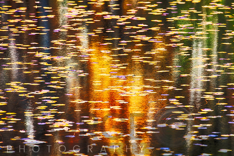 Leaves in a Pond During Autumn