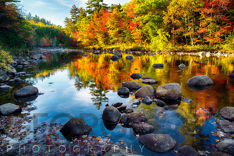 Colorful Trees Along the Swift River