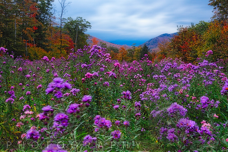 Autumn Meadow at Dusk Filled with Wildflowers