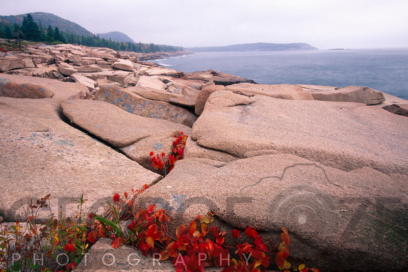 Coastline with Granite Rocks,  Acadia Nat'l Park, Maine