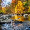 Vibrant Hues of Autumn, Black River, New Jersey