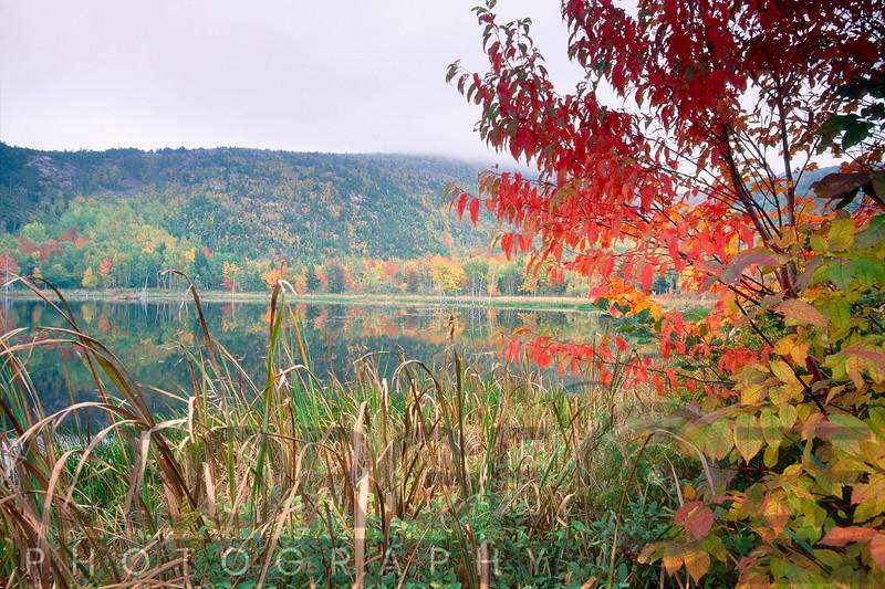 Autumn Scenic, Acadia National Park, Maine
