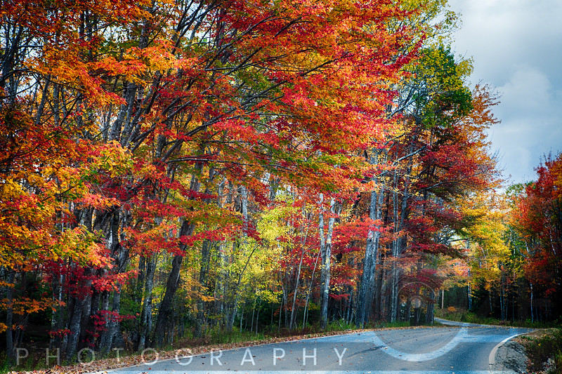 Fall Scxenic Road in Acadia, Maine