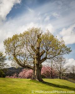Spring Tree, Windermere