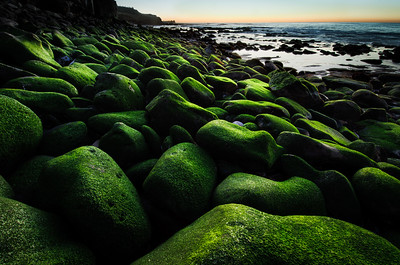 Mossy Sunset