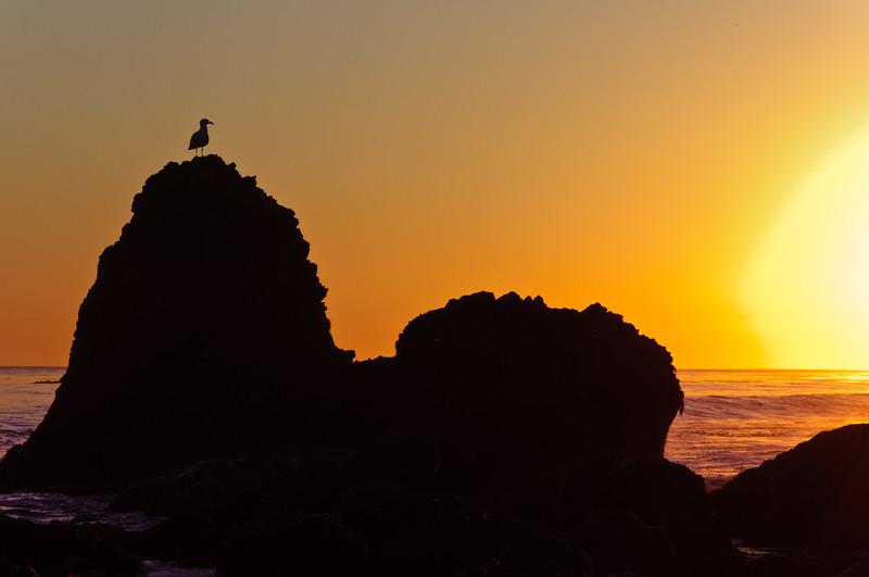 Sunset Sentry