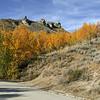 Roadside  fall colored trees, US20, Idaho