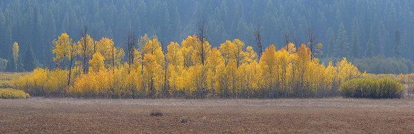 Fall Aspens Sawtooth National Recreation Area