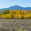 Aspens in Fall along IDAHO 87