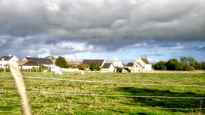 A Normandy Dairy Farm