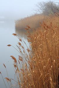 Foggy Riverbank