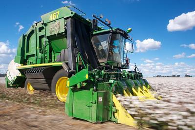 Cotton picking 7
