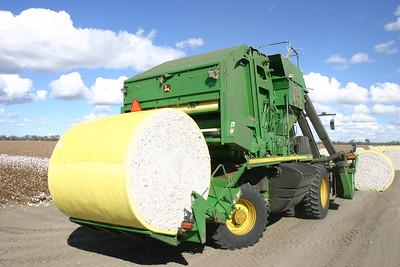 Cotton picking 4