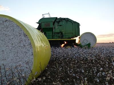 Cotton picking 1