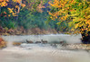 """Deer Crossing River<br /> <br /> Deer Crossing Cacapon River - .............to purchase - <a href=""""http://bit.ly/1qI4RUE"""">http://bit.ly/1qI4RUE</a>                                                          .............................................pixel paintography"""