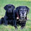 Rosie&Daisy_20170927_2006