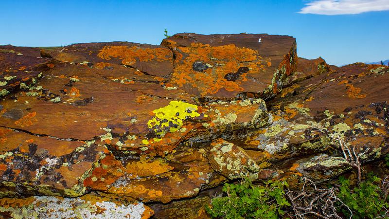 Lichen on Deer Mountain
