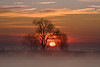 Sacramento Delta Sunrise and Tree