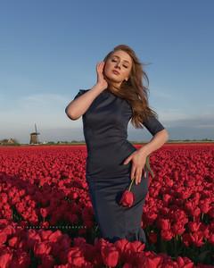 Tulip Day North