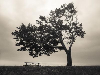 Beach Tree 3