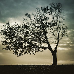 Beach Tree 2