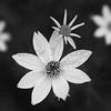 Floral B&W 2
