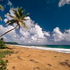Palm Tree on Maunabo Beach, Puerto Rico