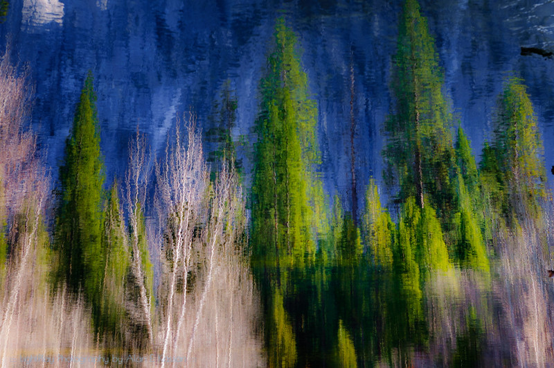 Merced River Pines