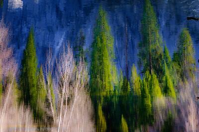 Merced River Pines