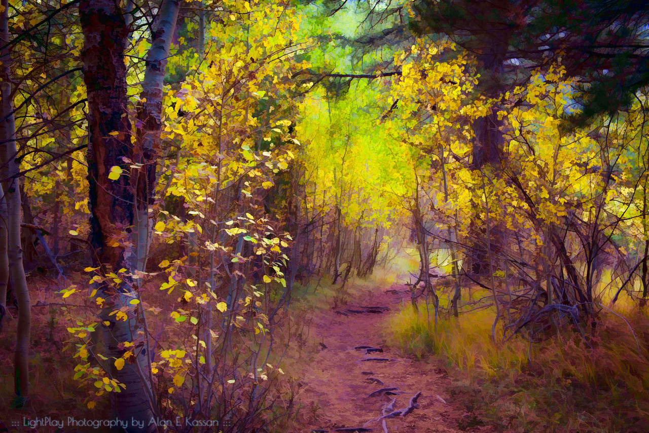 Beckoning Path