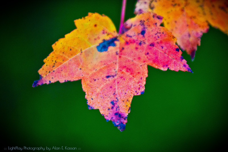 End of Leaf