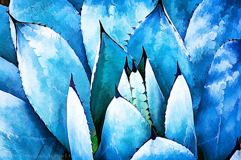 Prickly Blues