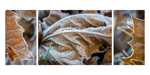 Dried and Frozen