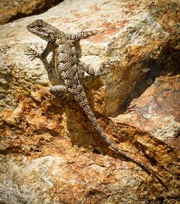 RME_Reptiles_Amphibs_Snakes_005_20130713-2