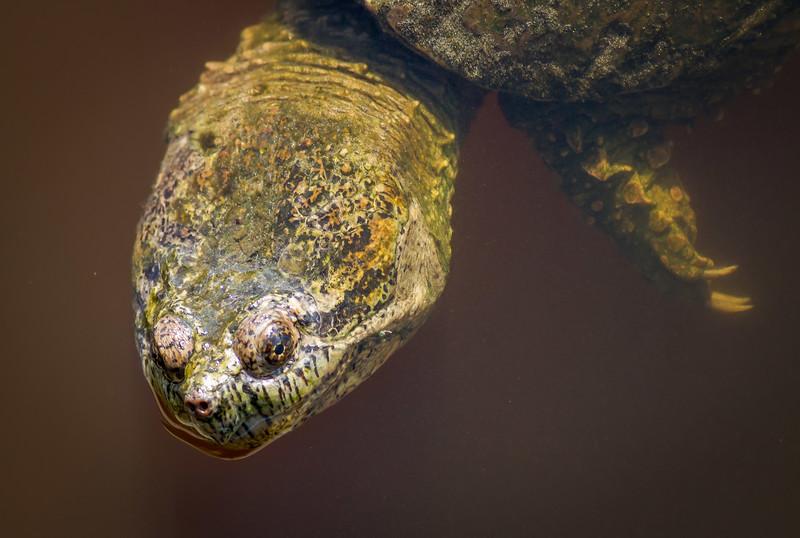 RME_Reptiles_Amphibs_Snakes_011_20140512