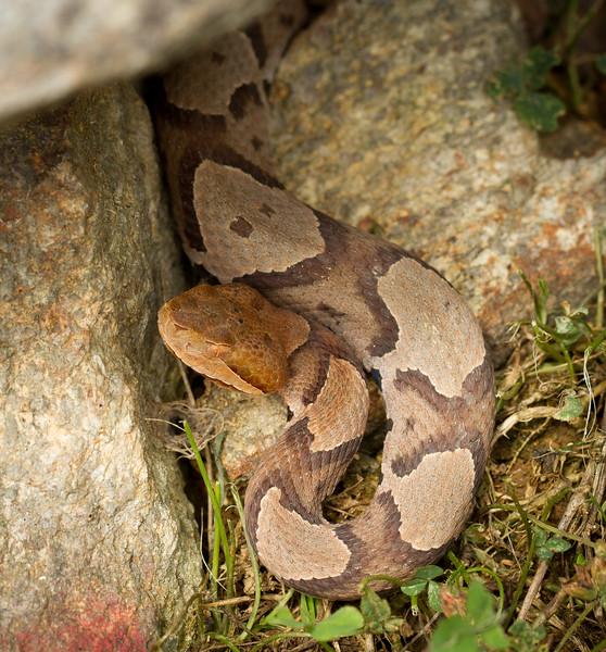 RME_Reptiles_Amphibs_Snakes_001_20130712-2